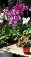flower-market-4